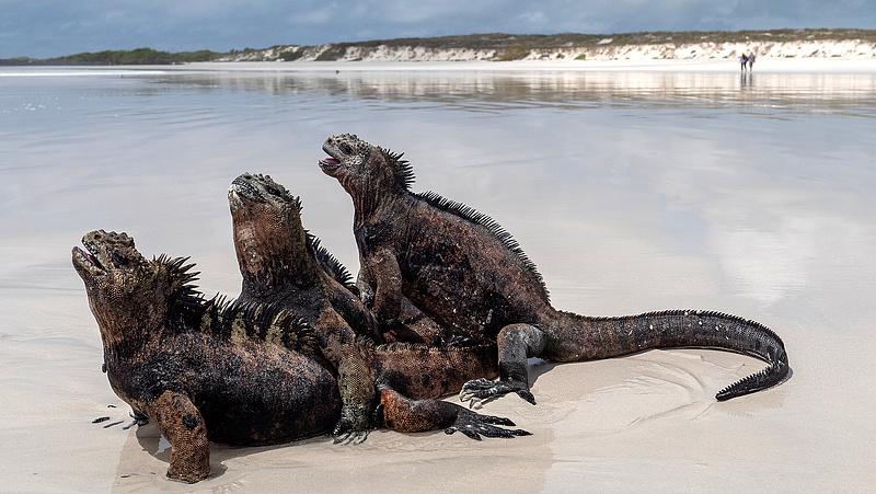 A műanyagszemétbe fulladhat Darwin szigete