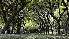 Rengeteg erdő születhet Magyarországon