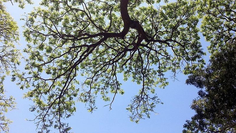 Jókora erdőtelepítési hullám indul - megszólalt a minisztérium
