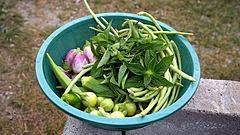 Zöldséget, gyümölcsöt termeszt? Itt vannak a kilátások