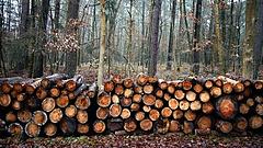 Közel száz fa kivágására készülner a Gellérthegyen