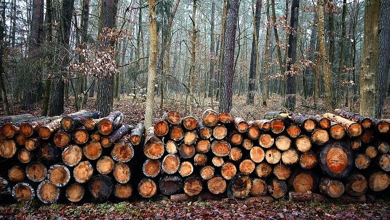 Újabb figyelmeztetés: a talaj károsítása gyorsíthatja a klímaváltozást