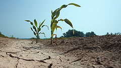Mezőgazdasági biztosítás: idén így néznek ki a szolgáltatások