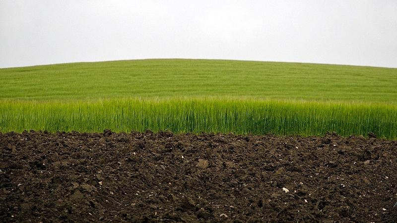 Itt az újabb korlátozás: leállhat az ukrán gabonaexport is