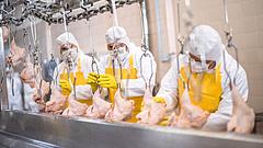 Újabb településen jelent meg a madárinfluenza Lengyelországban