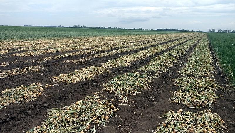 Nagyot bukott az állam egy agrárperben