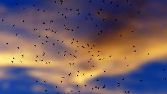 Szúnyogok vs fertőző betegségek: felmérhetetlenül káros egy új rendelkezés