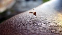 Olyan meleg van, hogy leállt a légi szúnyogirtás