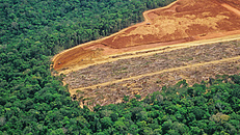 Szokatlan védelmet kaphatnak az esőerdők