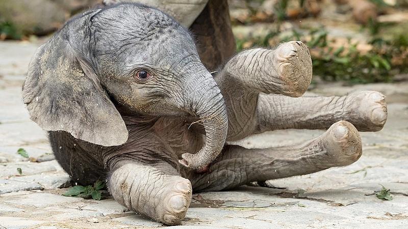 Lombikprogramból született a bécsi állatkert legújabb lakója