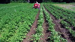 A mezőgazdaság is húzza az exportot