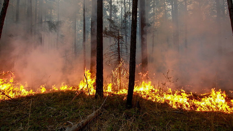 Akkora tűz pusztít Szibériában, hogy Putyin már a hadsereget is bevetette