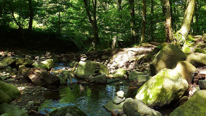 Új uniós erdőstratégia: zúgolódik az Agrárminisztérium
