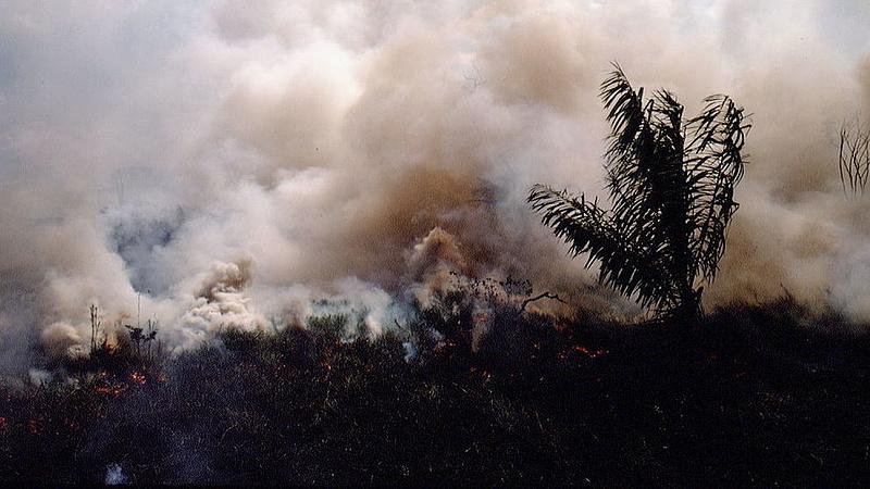 Így lehetne megálllítani az őserdő kiirtását
