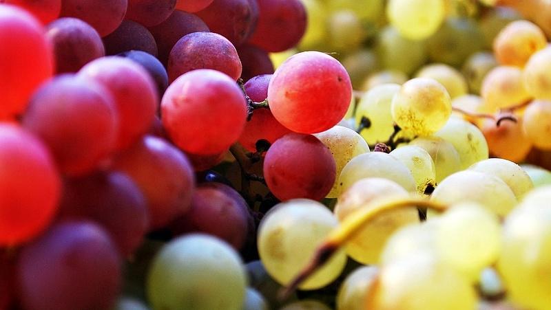 A Dunától keletre is meg kell semmisíteni a beteg szőlőtőkéket
