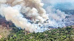 Ezért fontos Amazónia védelme - friss kutatás