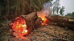 Csúcsra jár az erdőirtás az Amazonas brazíliai térségében