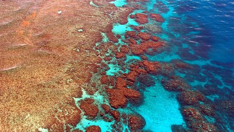 Ijesztő adat jelent meg a korallzátonyokról
