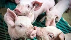 Igazi vagy műhúst eszik majd a világ? A kérdés eldőlni látszik