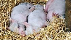 További támogatást kér az Agrárminisztérium Brüsszeltől