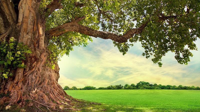 A fák legyőzték a cégeket - szigorúbb szabályokat vezetnek be a VIII. kerületben