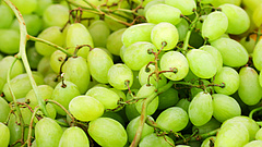 Intézkedett a Lidl - újabb felvonás a szőlőcsatában