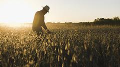 Szétrohadna a termés a földeken, ha nincs könyöradomány a gazdáknak