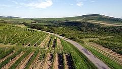 Megújul a borászok szakmai szervezete
