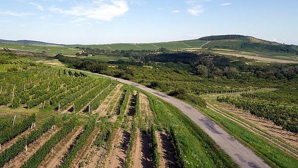 Tokaji borászatot és bőkezű támogatást adott az állam az új egyetemnek