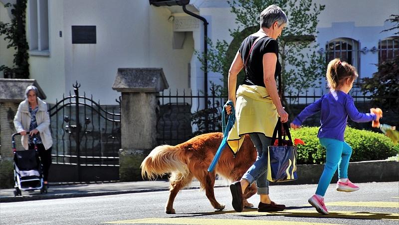 Háromezer kutya ivartalanítását támogatja a kormány