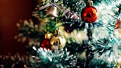 Minden, amit a karácsonyfa kidobásáról tudni szeretett volna