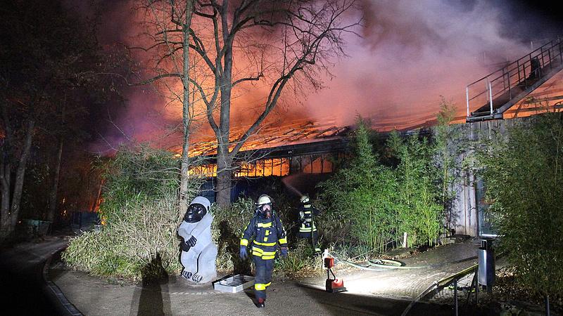 Meglehetnek a szilveszteri állatkerti tűzvész felelősei