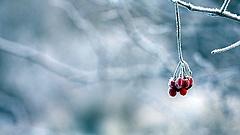 Karácsonyfa-állítás orosz módra, hóviharban