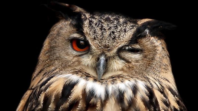 Megjelent Magyarország első átfogó madáratlasza