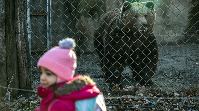 Keresik az állatkert új vezetőjét