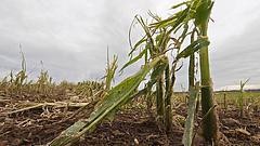 Öt éve nem látott pusztítást hozott a gyümölcsösökben a klímaváltozás és az ítéletidő