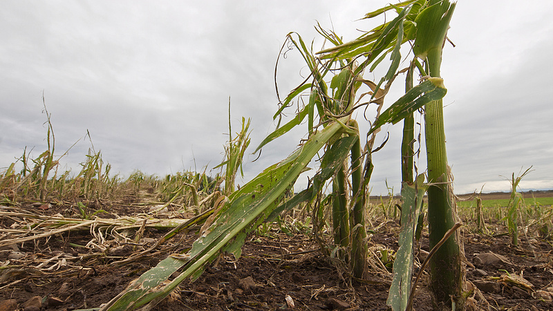 Mezőgazdasági krízisbiztosítási rendszert vezetnének be Magyarországon