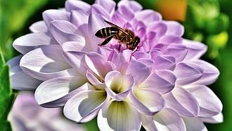 Alig lesz tavaszi méz