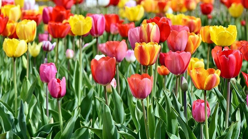 Virág vagy csokor nőnapra - egy ezres darabja