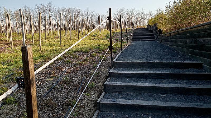 Hova lett négyezer szőlőtő és a sok látogató?