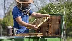 Nagy baj fenyegeti a méhállományt