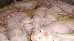 Pénzhez juthatnak az állattartó telepek