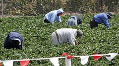 Nagy változás jön az agráriumban EU-szerte