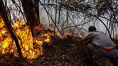 Felpörgette az erdők kipusztítását a járvány