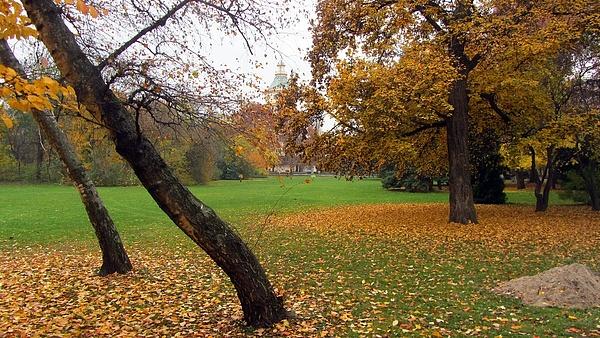 14 ezer fát ültetnek el az ősszel a hazai településeken