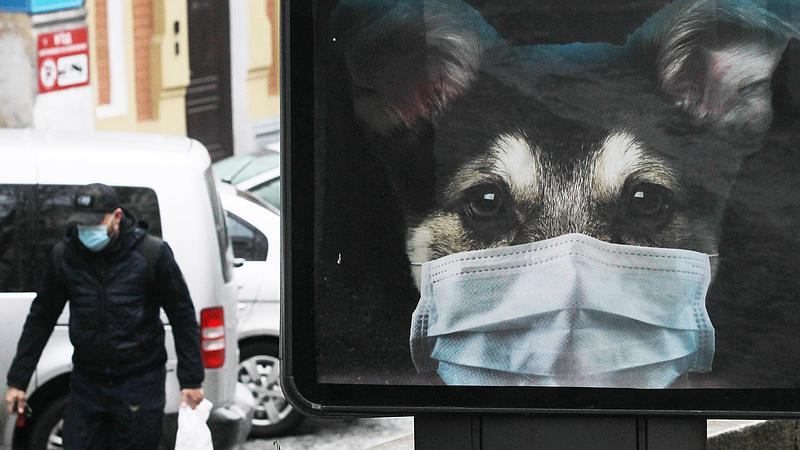 Továbbra is gyorsan terjed a vírus Ukrajnában