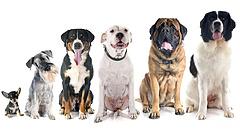 Jó soruk van a magyar kutyáknak