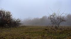 Ködös idővel indul a szombat