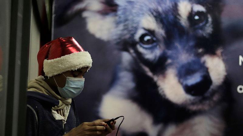A petárdázástól óvnák leginkább az állatokat a magyarok