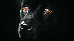 Kutyatenyésztőket ellenőriz a hatóság: bukott egy albertirsai ebtartó